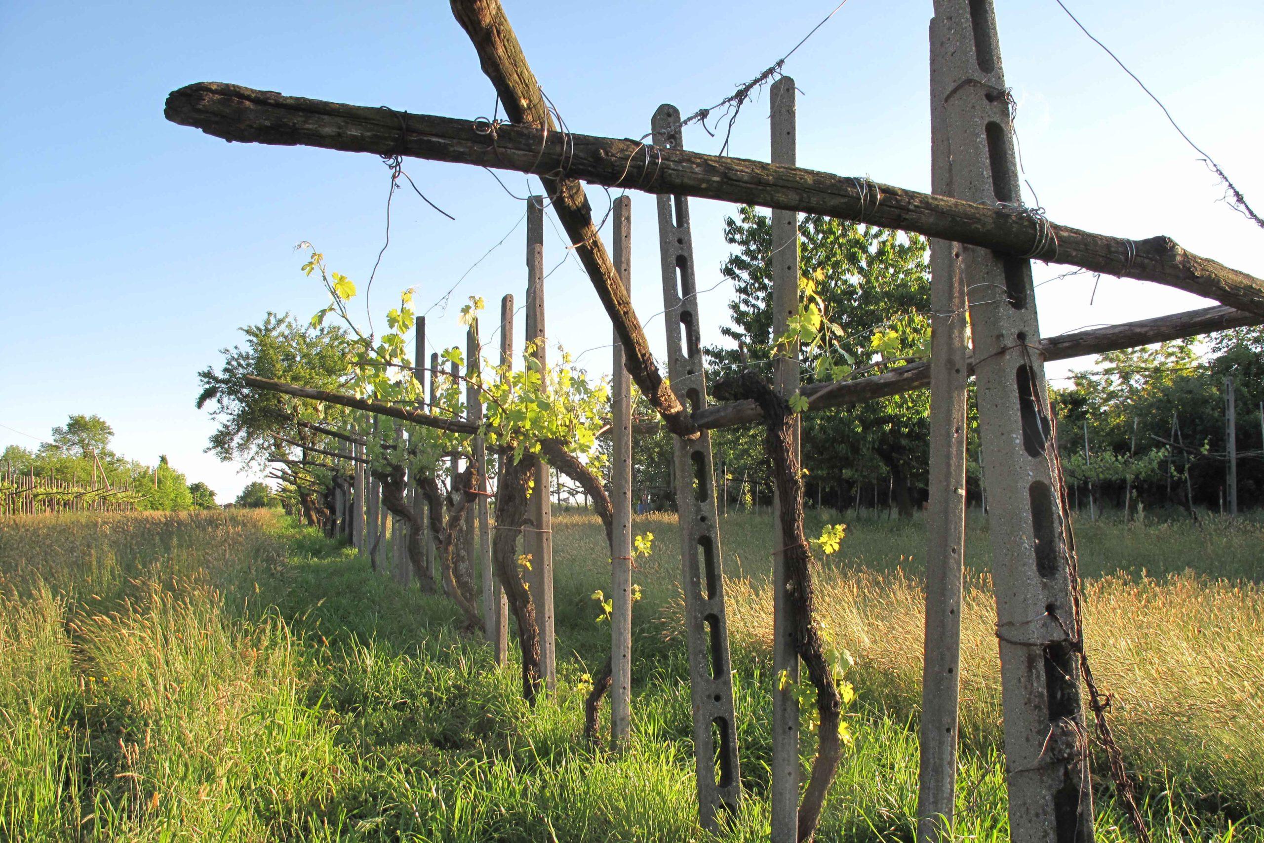 Iniziative per i viticoltori e gli hobbisti della collina